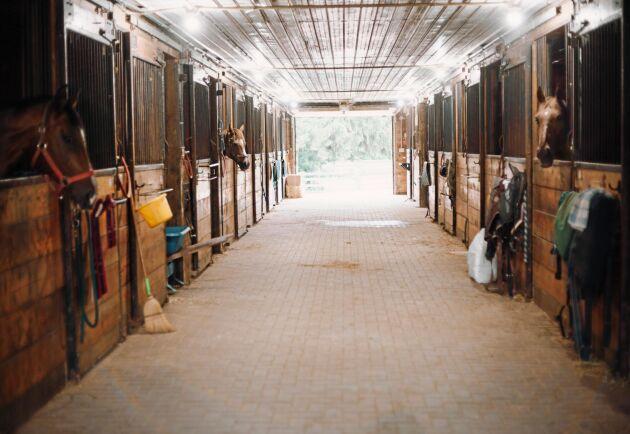 Att bygga om alla stall så att hästarna går lösa i boxar (som på bilden) eller andra system i stället för att stå uppbundna i spiltor beräknas kosta mellan 1,5 och 3 miljarder kronor och ta 10–15 år.