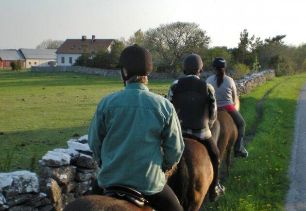 Arkivbild. Hästföretaget har turridningsverksamhet och sattes i karantän på grund av misstänkt kvarka. Hästarna på bilden är inte från samma verksamhet.