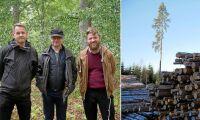 ATL:s trädpodd: Här finns Sveriges bästa tallar