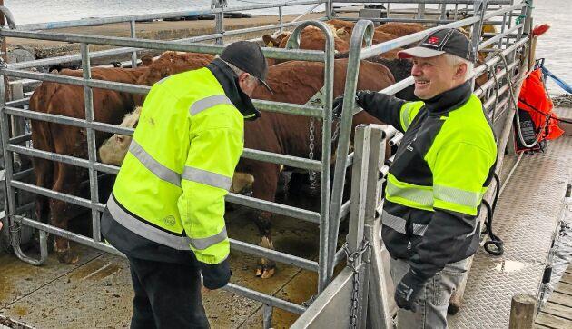 Ronny Johansson får betalt för den betestjänst som hans kor utför i Blekinges skärgård.