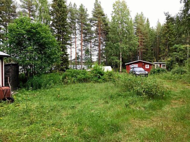 Så här igenväxt vare tomten där den ganska fallfärdiga stugan stod. Man kan bara skymta sjön Kvarnträsket.