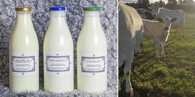 Gräsmjölken vinner mark
