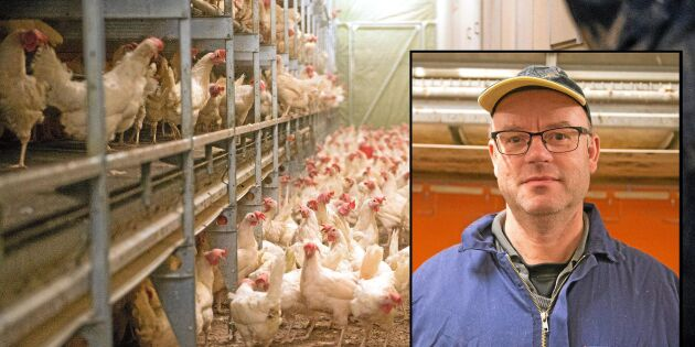 """Aktivisternas plan för stulna hönsen - """"rent djurplågeri"""""""