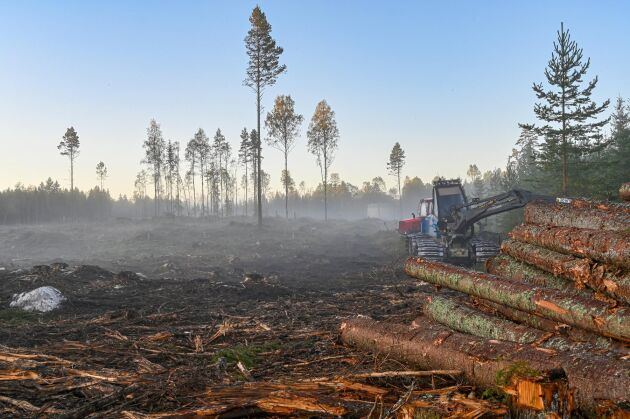 Nu pågår arbetet med regionala skogsprogram i så gott som alla län, men det har kommit olika långt.