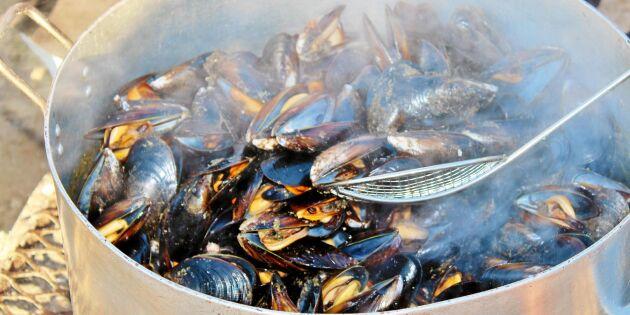 Under de planerade turerna med turister serveras också färska musslor i grädde och vin. Tillredningen sker i en kittel över öppen eld.