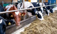 Småskalig mjölkproduktion är värdefull