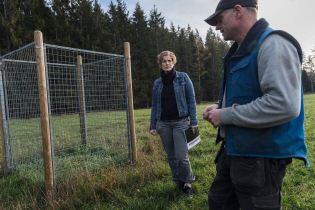 I buren som Elin Beckman och Ulf Thunell har satt upp kan man tydligt se hur mycket grödor marken skulle ge om dovhjortar inte betade på åkern.