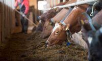 """""""Stelbent organisation bidrar till veterinärbristen"""""""