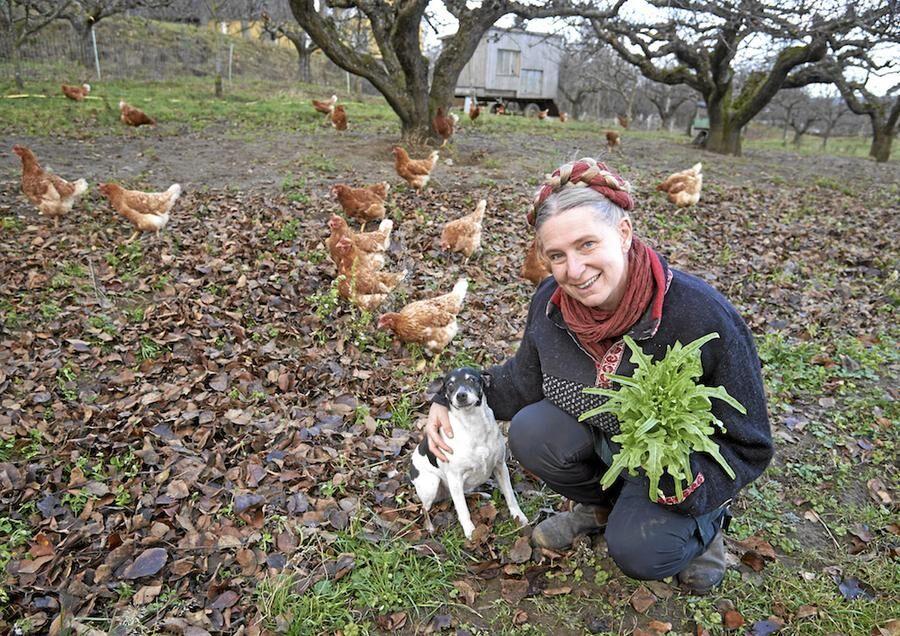 Den danska gårdshunden Siri gillar att springa utomhus med hönsen.