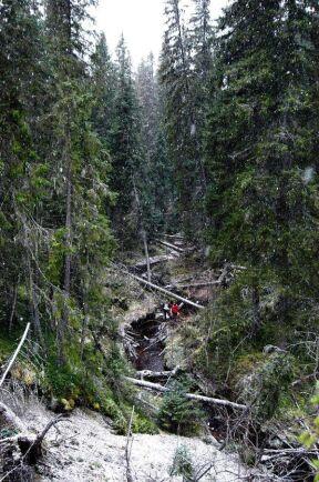 Nyckelbiotopen på bilden, en bäckravin i Norrbotten, är inte skadad.