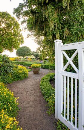 Gult är inte fult! Vem kan bli annat än glad när man möts av den solgula färgen? Den lyser som glada utropstecken och återkommer på flera håll i trädgården.