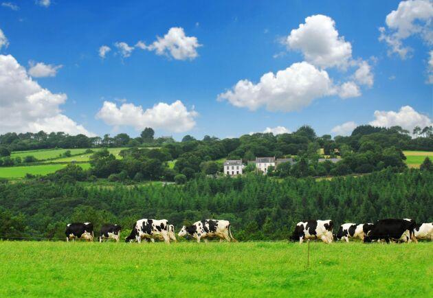 Det finns 36 664 ekologiska jordbruk i Frankrike, vilket motsvarar 8,3 procent av gårdarna. Antalet ökade med 13,6 procent mellan 2016 och 2017. Till 2020 ska andelen vara 15 procent är målet.
