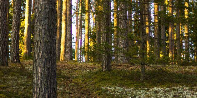 Baltikums skogar god potential för avkastning