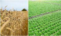 Uppåt för trädgårdsnäringen i pandemin