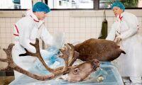 Norsk smitta bland renar ett mysterium