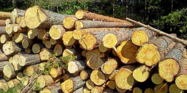 Äganderätt i skogen utreds