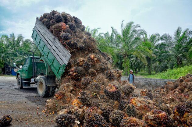 Produktionen av palmolja från Sydostasien lever till skövling av regnskog, något Dalsspira inte vill vara del av längre.