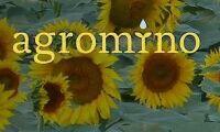 Försämrat resultat för Agromino