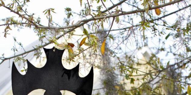 Häng fladdermöss i träden