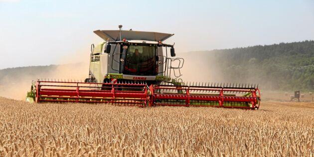 Här är grödorna som odlas mest i Sverige