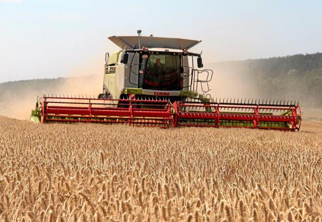Vall, vete, korn och havre odlas mest av svenska bönder, visar statistiken.