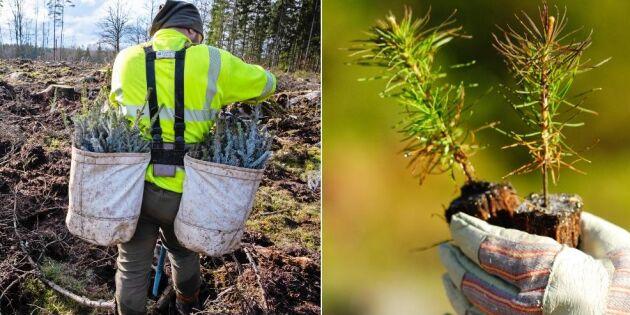 Regeringen säger ja till inresta skogsarbetare