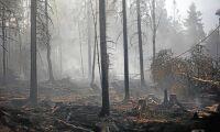 Bränder och torka hett i medierna