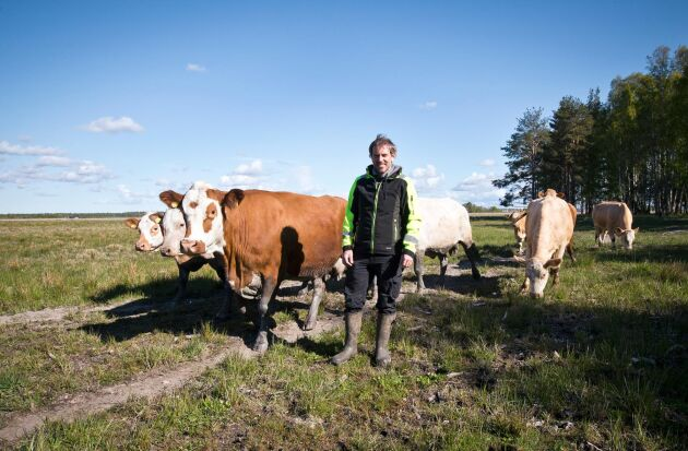 OBS! SPARA BILD TILL ETTAN Miljöåtaganden i form av naturbete är en viktig del i företagande för Henrik Nisser på Alstrums gård utanför Karlstad. Här ska några av djuren beta strandäng på Hammars udde.