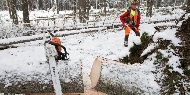 Skogsstyrelsen stoppar Stihlköp