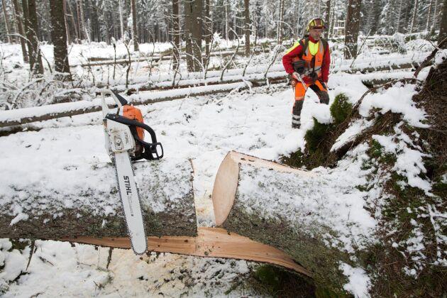 På bilden syns en motorsåg från Stihl i samband med en av Skogsstyrelsens utbildningar.