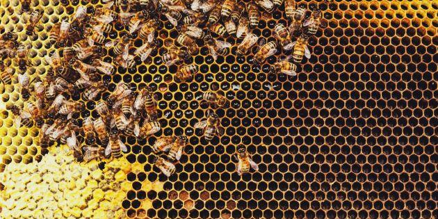 Honungsfusk på tävling – hälften diskades