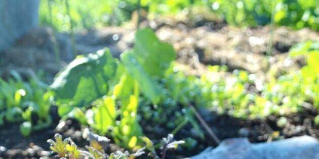 Nu är det dags att fixa höstens grönsaker