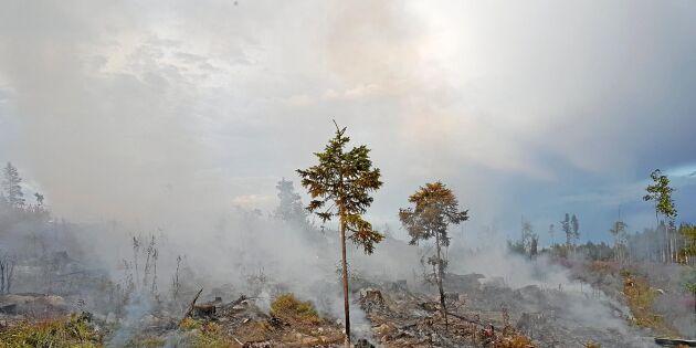När räddningstjänsten lämnat – så säkrar du skogen