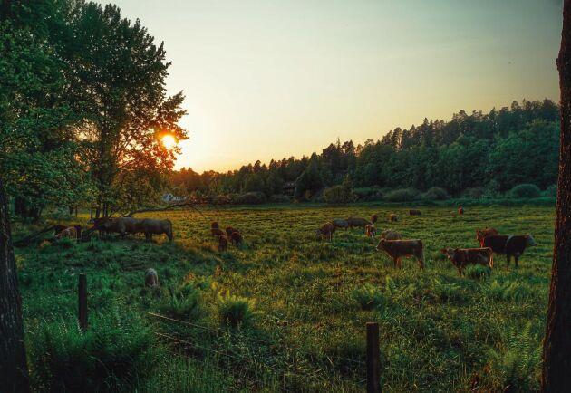 Svenskt lantbruk måste bestämma sig för om man tänker fortsätta driva industrialiseringen eller göra något annat, skriver debattörerna.