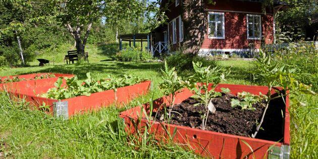 Odlingsbädd på 4 sätt: Gräva jordlimpa, pallkrage och djupsäng