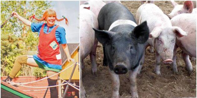 Stängd nöjespark hårt slag mot lokal grisbonde