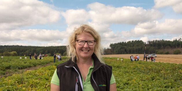 Våren en nystart för potatisodlare