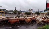 Tusentals djur i nöd efter stormen Harvey