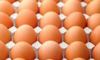 Fågelinfluensa ger äggbrist