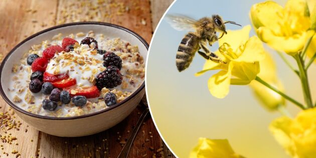 Detta försvinner från din frukost – om bina dör