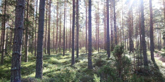 Rekordhöga skogspriser i söder men prisfall i norr