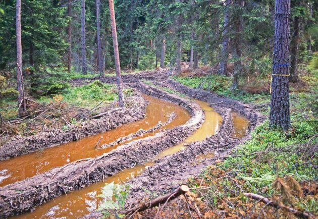 Markskador efter skogsmaskin, Södermanland.