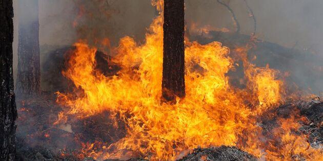 Väderstationer ska stoppa skogsbränder