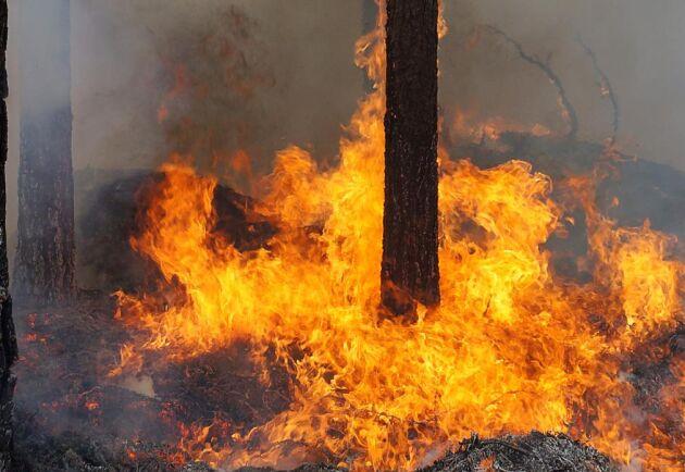 Gnistbildning från skogsmaskiner är den tolfte vanligaste orsaken till att skogsmark antänds och börjar brinna, enligt statistik från MSB och Skogforsk.