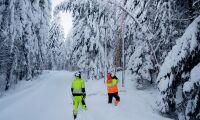 Efter snöovädret – 2000 träd över elledningar
