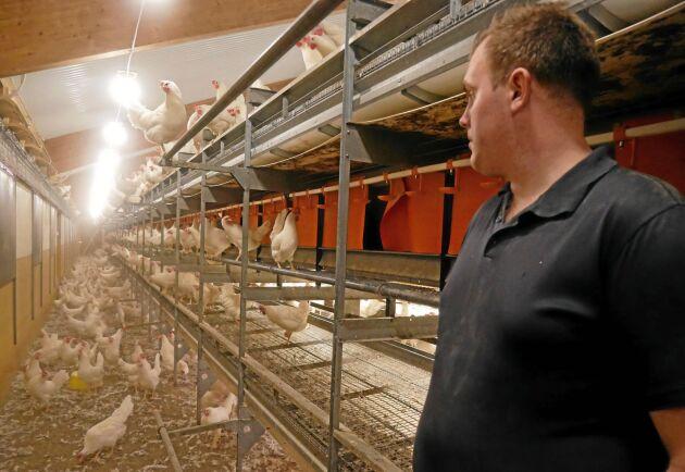 Gården har 76 000 frigående höns inomhus och köper in allt sitt foder. Kostnaderna för foder har stigit snabbt den senaste tiden.