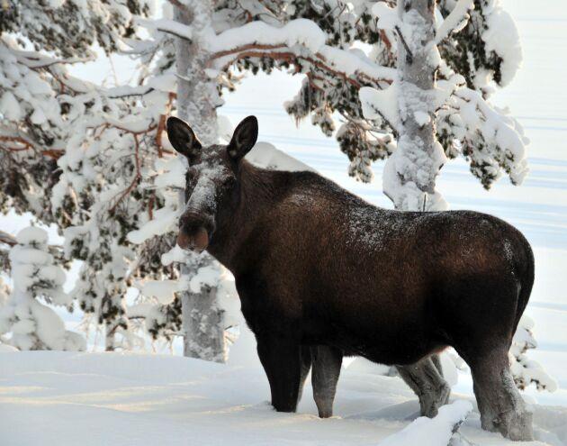 Skogsbolagen menar att svaret från Naturvårdsverket kom för sent.