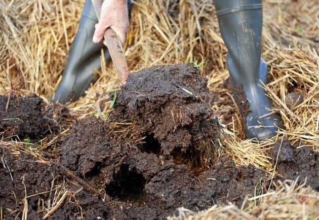 Ett sätt att mata jorden. Stallgödsel ger både näring och mull.