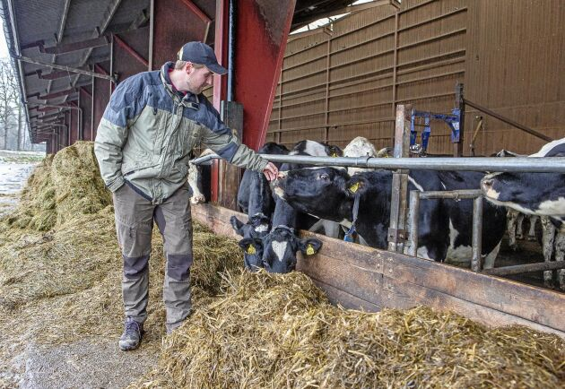"""Kornas matsmältning står för 43 procent av gårdens totala klimatpåverkan. """"Förhoppningsvis kommer nya foderblandningar att komma framöver som minskar kornas utsläpp"""", säger Andreas Markusson."""