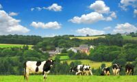 Mjölkpriset på rekordnivåer i Holland